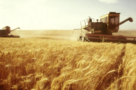الحكومة السورية تطلق خطة لتوسيع الانتاج الزراعي لمواجهة عقوبات متوقعة