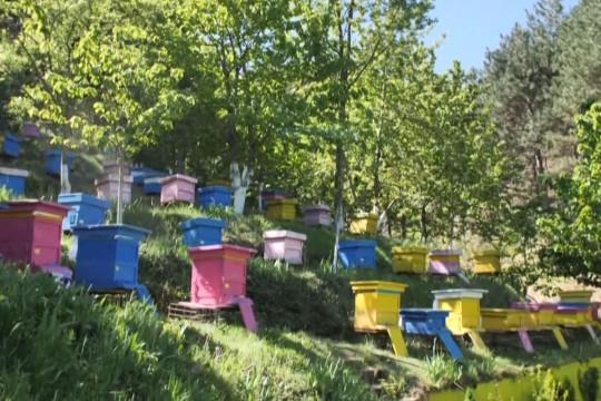 النحل في البانيا يستفيد من أزمة كورونا