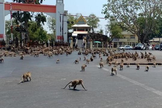 حيوانات المتنزهات ترتاح من إزعاج البشر في زمن كورونا