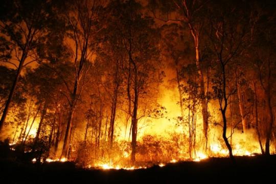 مديرية زراعة جرش: إجراءات جديدة ومدروسة للحد من حرائق الغابات في المُحافظة