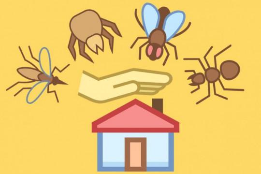 كيف تتخلصي من الحشرات المنزلية بخلطات طبيعية؟ - فيديو