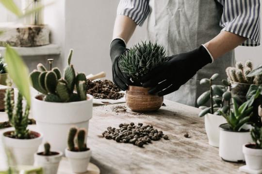 كيف نزرع النباتات في القوارير بطريقة صحيحة؟ - فيديو